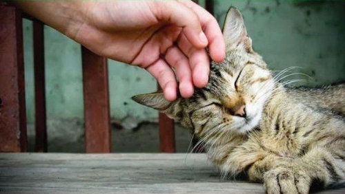 猫を飼った時の理想と現実03