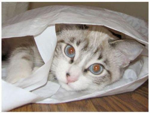 猫は見ている08
