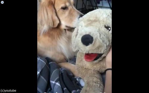犬の嫉妬02