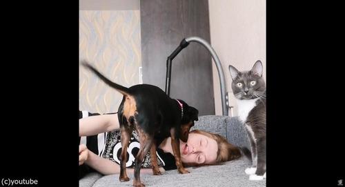 飼い主が倒れた縁起をしたとき、犬と猫の違い02