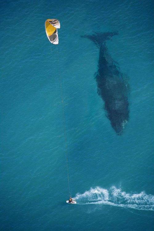 08大きい、巨体、ビッグな動物たち