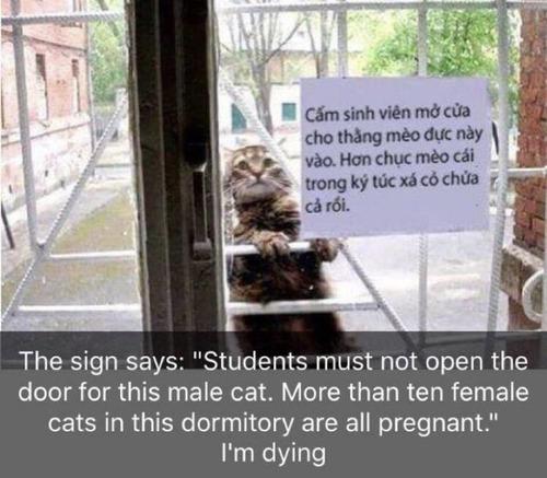 このオス猫を入れてやってはいけない01