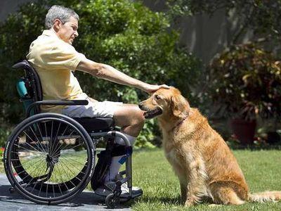 飼い主の命を助けた犬01