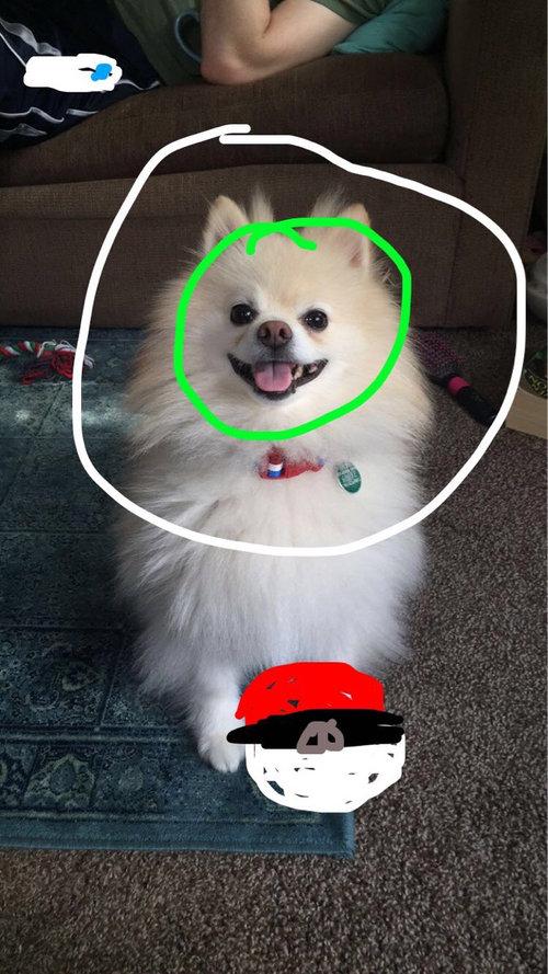 ハロウィン用の口ひげで、犬の眉毛を作ってみた05