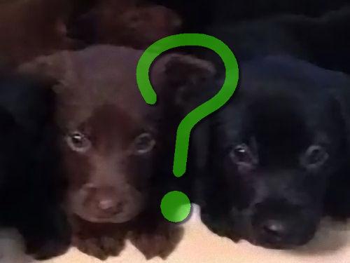 知人の犬が14匹も子犬を生んだ00