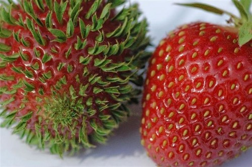 発芽した野菜や果物05