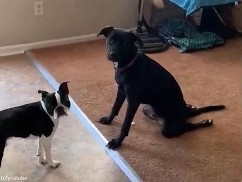 足がやわらかい犬01