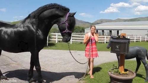 馬の彫像が気になる本物の馬02