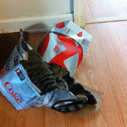 箱入り猫12