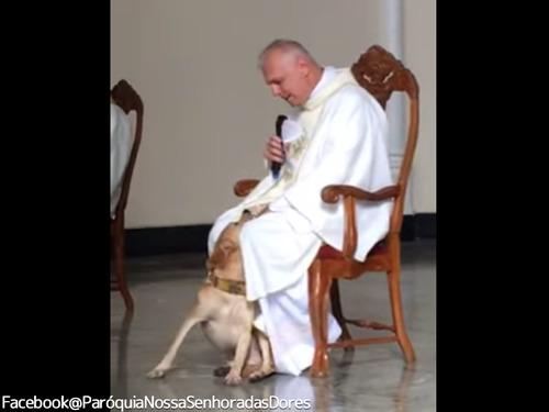 礼拝中に犬が乱入!神父の対応が話題に00