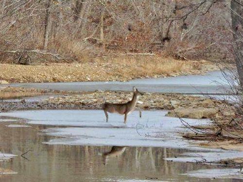 野生の鹿が足をすべらせるとき03