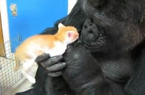 他の動物と仲良くする猫04