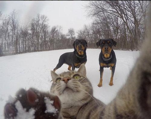 犬たちと一緒に自分撮りをする猫10
