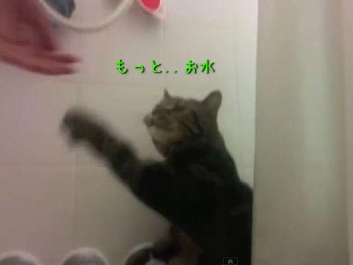 水が大好きな猫00