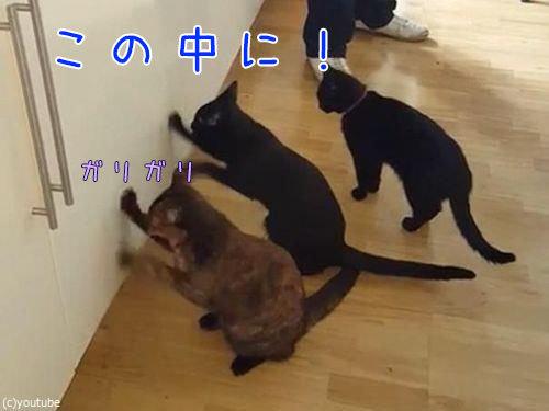 猫2匹が戸棚を連打00