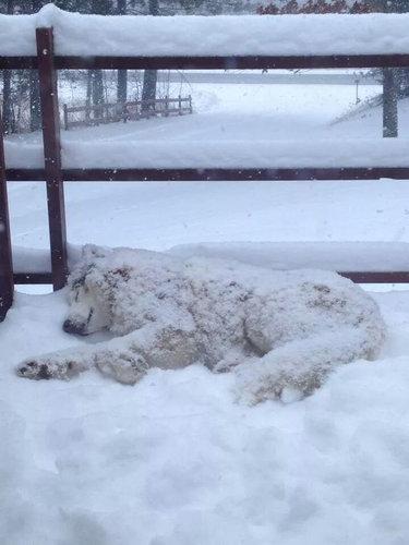 雪を喜ぶ動物10