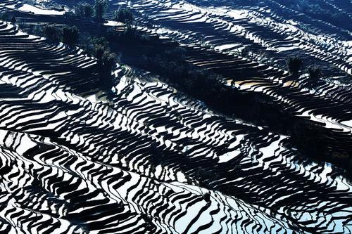 絵画みたいな中国の田んぼ01