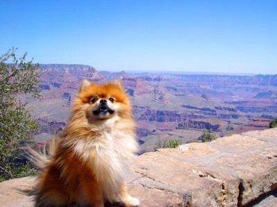 絶景を見下ろす犬05