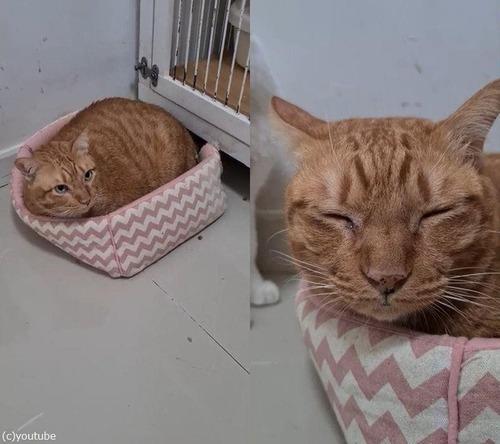 ベッドと大きな猫01