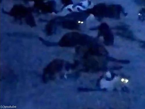 たくさんの猫の目が光る00