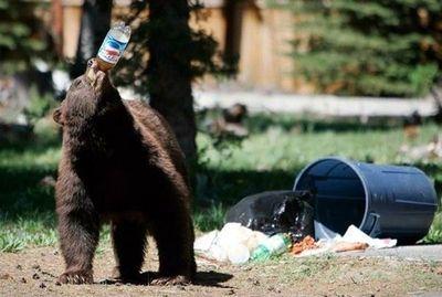 クマが釣られたり戦ったりあられもない格好したりする画像08