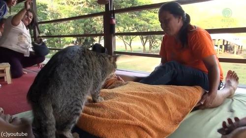 タイの猫マッサージ師01