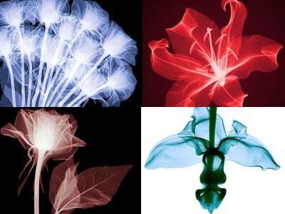 花のレントゲン00