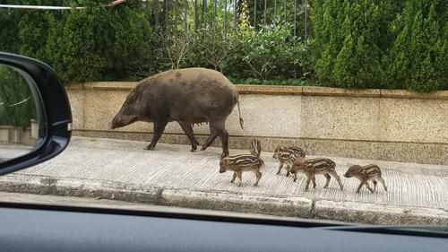 街中に出現した野生動物04