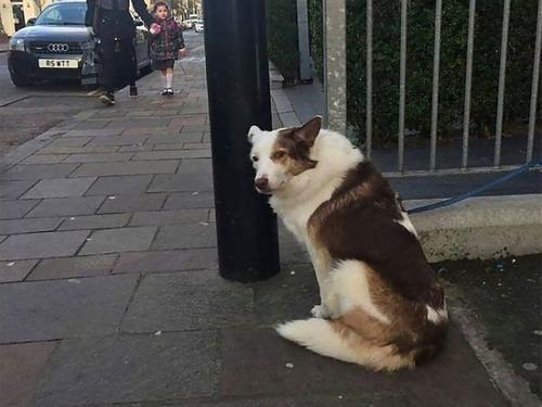 飼い主を待つ犬たち00