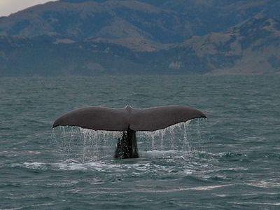 40トンの鯨がヨットに攻撃00