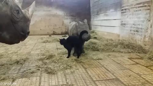 サイの赤ちゃんと猫01