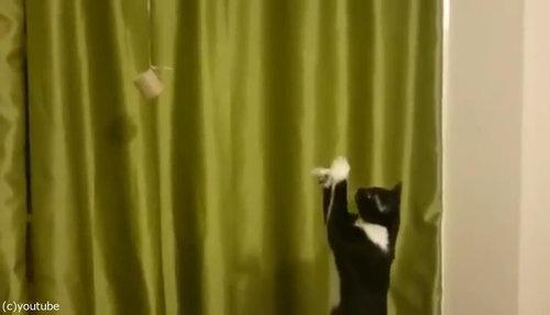 魔法を使いたい猫04