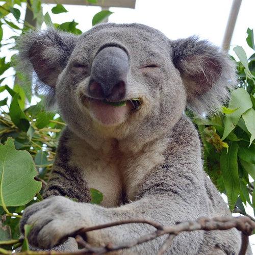 07笑顔、スマイルの動物たち
