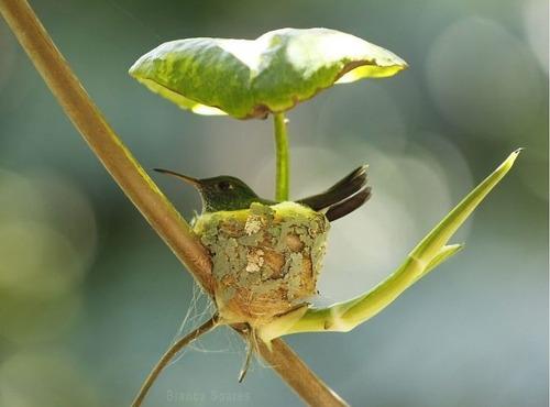 ハチドリの巣01
