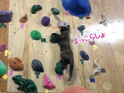 ボルダリング猫00