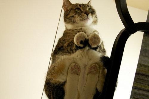 ガラスの上の猫10