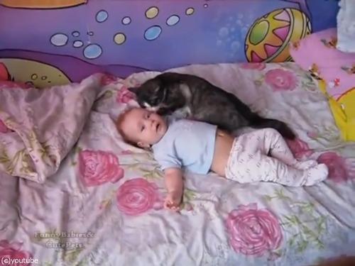 赤ちゃんをあやす猫01