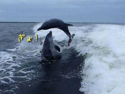 イルカの衝突