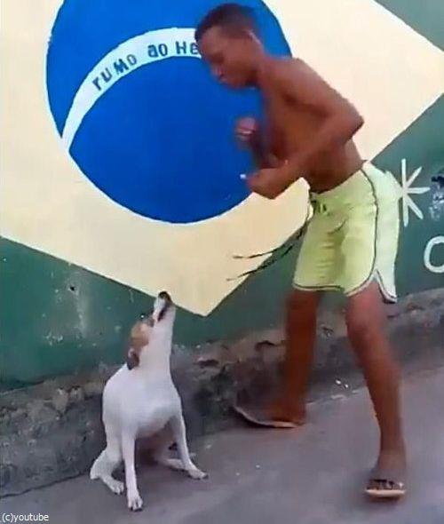 ブラジルは犬だってカーニバル04