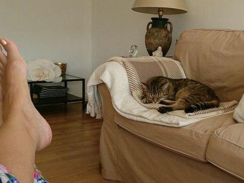 帰宅したら…見知らぬ猫がいる06