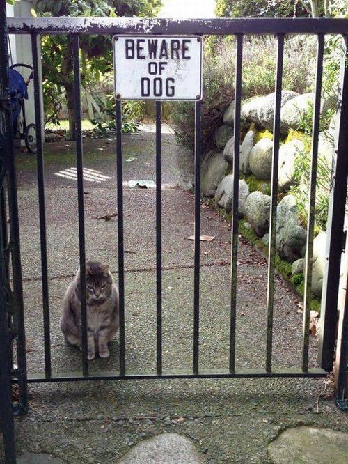 猛犬注意…と思ったら違う例08