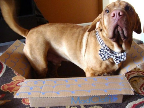 箱好きの犬01
