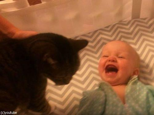 猫が大好きな赤ちゃん06