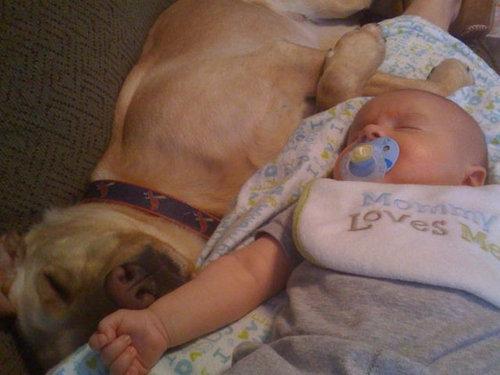 息子と愛犬の友情02