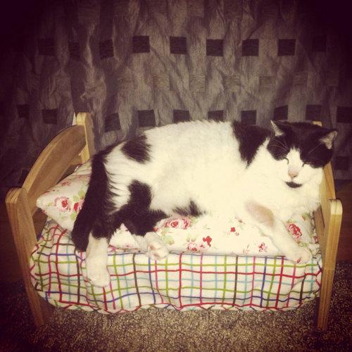 猫ベッド09