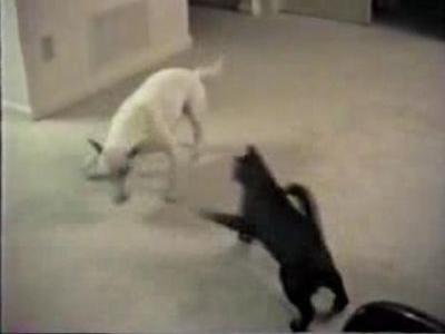 変幻自在の白犬,カウンターの黒猫