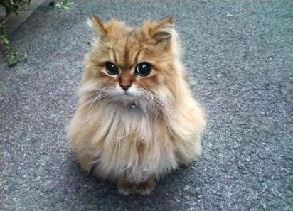フクロウ猫06