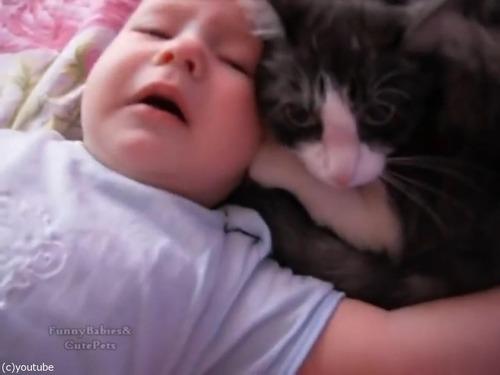 赤ちゃんをあやす猫05