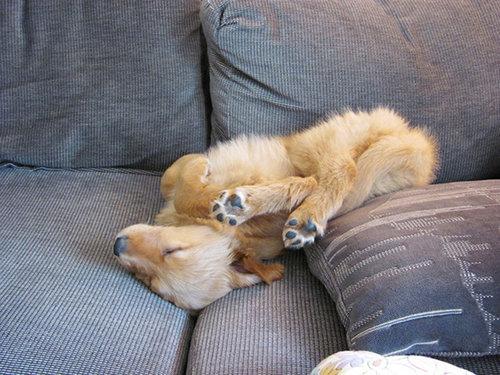 子犬はどこでも寝れる22