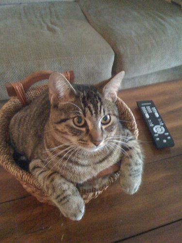 テトリス猫21